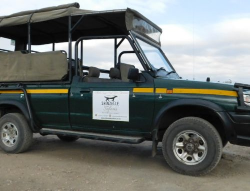 How to ensure the perfect first time safari experience in the Kruger Park